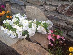 Más color en primavera