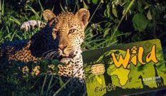 Die Wild Card für die Südafrika Reise kaufen? So geht's: Meine Tipps zum Kauf mit Erfahrungsbericht und Rechenbeispiel ob sich die Karte für dich lohnt.