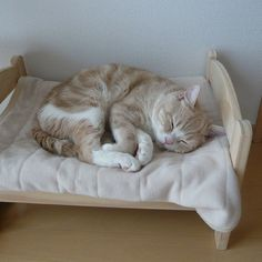 Japanese cat owners turn IKEA doll beds into adorable cat beds. #boredpanda  #cat