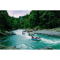 Enjoy a one day tour #whitewater rafting on #Pacuare River!  Amazing views of virgin tropical #rainforest appear before your eyes as you descend this pure #river.