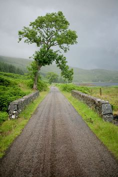 "Isle of Mull, Scotland  *ooh, that tree...""pardon me, just stepping over this lovely road here...""  ^_^"
