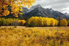 Gorgeous fall foliage in Alberta, Canada