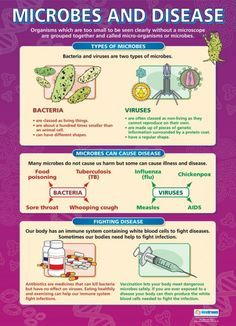 biology revision Microbes and Disease Poster Gcse Biology Revision, Study Biology, Biology Lessons, Teaching Biology, Science Biology, Science Facts, Physical Science, Life Science, Forensic Science