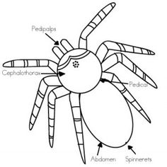 draw and label a spider