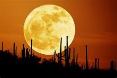 Autumn Moon over the desert