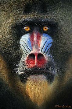 earthandanimals: Face Paint Photo by Steve Mackay