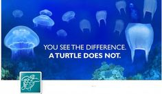 You see the difference. A turtle does not. Stop using plastic bags!  -  It's funny because I made a very similar ad for a project for my digital media class!