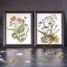 Pressed Flower Art – So Easy With Beautiful Results - Diy Flowers Pressed Flowers Frame, Pressed Leaves, Pressed Flower Art, Flower Frame, Flower Wall, Art Floral, Deco Floral, Leaf Flowers, Diy Flowers