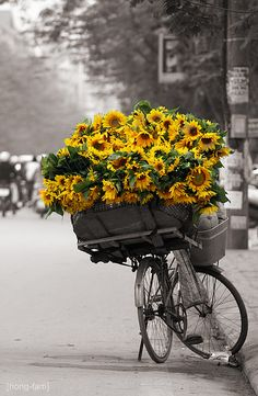 Basket of sunshine #sunflowers perfect picture for my balck and white kitchen dazzled with sunflowers