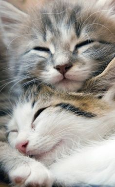 Content kittys