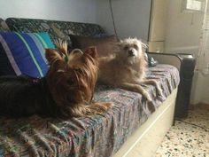 Viola con il suo amico Lasko   https://www.facebook.com/photo.php?fbid=200087080167525&set=pb.171036026405964.-2207520000.1379083159.&type=3&theater