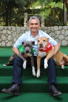 Some of you may not know Junior, Cesar Millan's blue Pit Bull puppy,