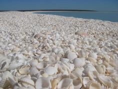 Shell Beach in Monkey Mia, Western Australia...— Annita Pring