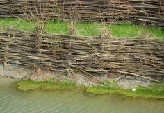 Willow spiling