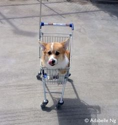 Mini Shopping Cart Corgi