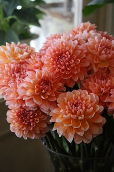 Coral dahlias and classic white gerbera daisy.  Bridal bouquet= done