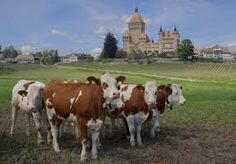 photo chateau vufflens suisse - Recherche Google Hereford Cattle, Beef Cattle, Country Of Origin, World War Two, Switzerland, Explore, City, French, Google