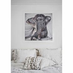 Elephant Adele poster från Love Warriors. En maffig poster med ett fotografi av den söta e...