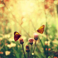 Butterflies by ~CasheeFoo on deviantART
