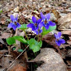 It's finally getting warmer  . . #springisfinallyhere #springmood #springfeeling #springishere #brno #czech #czechrepublic #igerscz #morava #czech_world #czechphotography #czechnature #springflowers #springblooms #forestflowers #blueflower #hikingadventures #hikingtrails #hikingculture #hikinglife #hikingtrip #springhike #cityhike #citynature #outdoorslife #naturelovers #naturepics #forestlife #gaylife #gaystagram