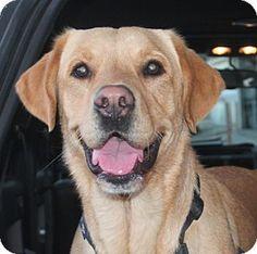 84 Best Dogs Images Dogs Dogue De Bordeaux Bordeaux Dog