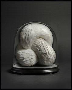 Kate MccGwuire. Crave, 2012. Mixed media with white pigeon feathers in antique dome 41H x 29D x 40W cm
