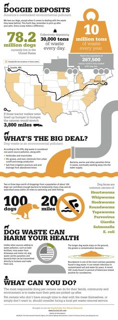 DoodyCalls Infographic. A little extra motivation for picking up doggie poop. good for earth and human health!  14% of Americans have roundworms.  eew.
