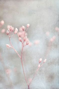 A bit of pink in a haze.  TG