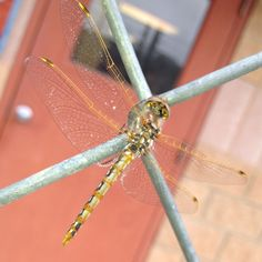 Beautiful dragonfly taken by Mario McMillin