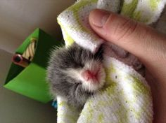 Dec 2018 - How to Care for Orphaned Kittens Less Than Three Weeks of Age. Taking care of newborn kittens that have been orphaned can be very rewarding, but very challenging. Humans are poor substitutes for a mother cat, and care and feeding of very. Newborn Kittens, Baby Kittens, Cats And Kittens, Raising Kittens, Kitty Cats, Kittens Cutest, Pet Insurance Reviews, Best Pet Insurance, Cat Care Tips