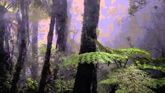 Sounds Forest Rain at Night, Crickets Owls Rain Wind, Naturals Sounds  Sounds Sleeping, Relaxing - http://www.soundstorelax.com/nature-sounds/animals/crickets/sounds-forest-rain-at-night-crickets-owls-rain-wind-naturals-sounds-sounds-sleeping-relaxing/