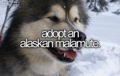 #Bucketlist DONE! He is a malamute husky mix but still.. I love my wolf look a like!