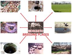 Common breeding places for mosquitoes! #science #education #insects