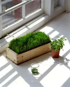 Wheat grass isn't just for juicing or feeding to pets -- it's also an attractive plant when used as decor, especially when it's a healthy, vivid green color. Wheat grass can be purchased ...