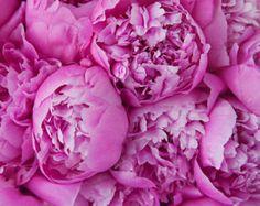 pink peonies - Google Search