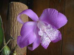 Siembra tus propias orquideas