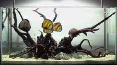 Featured in Tropical Fish Hobbyist's (TFH) September 2011 issue in the Adventures in Aquascaping column, we take you through the creation and final setup of ...