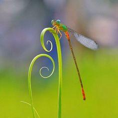 25 Most Beautiful Macro Photography examples and 10 Tips for Beginners Beautiful Bugs, Beautiful Butterflies, Amazing Nature, Foto Macro, Macro Photo, Mantis Religiosa, Insect Photos, Fotografia Macro, A Bug's Life