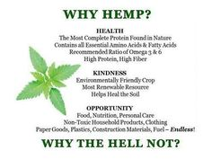 """Cannabis CBD Rich Hemp Oil Products are finally here! the Now-Not tomorrow """"Cannabis Hemp Green Rush Movement"""" Home Based Business Opp Marijuana Facts, Medical Marijuana, Weed Facts, Can Am, Endocannabinoid System, Complete Protein, Cbd Hemp Oil, Science, Amino Acids"""