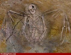 fallen angel, giants, nephilim skeleton with wings Aliens And Ufos, Ancient Aliens, Ancient History, Nephilim Giants, Giant Skeleton, Unexplained Mysteries, Mystery Of History, Bizarre, Bird Pictures