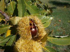 Tanto Piacere ;-) Coconut, Autumn, Fruit, Image, Fall Season, Fall