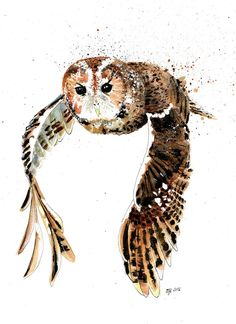 Owls by Jina Gelder, via Behance.   This artist snaps photos of the owls and then paints from them.  Some great paintings of owls in this link.