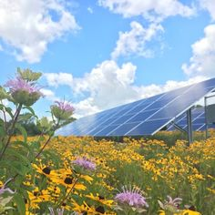 Connexus Energy SolarWise garden