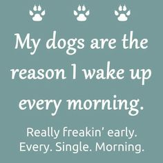 My dogs are the reason I wake up early every morning.