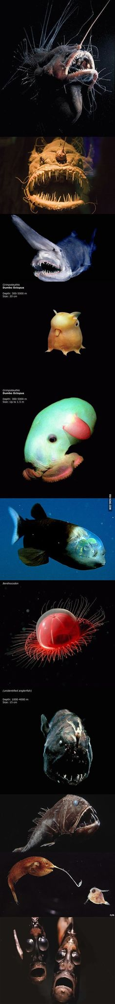 Creatures from the Mariana Trench