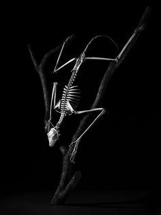 Esqueletos de animais esculturas
