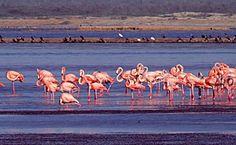 Santuario de fauna y flora los Flamencos - Buscar con Google