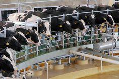Uruguay: Envíos de leche caerán un 5%