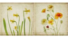 scanned flowers - Google Search