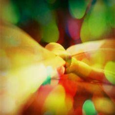 Il fiocco dell'amore...sui miei banki della chiesa...